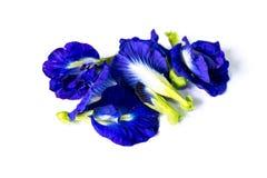 Pea flowers Stock Photos