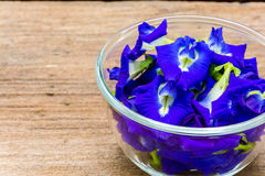 Pea flowers placed in a glass bowl Stock Photography