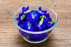 Pea flowers placed in a glass bowl Royalty Free Stock Image