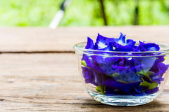 Pea flowers placed in a glass bowl Stock Photos