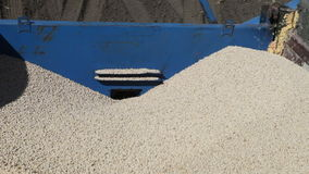 Pea grain is poured into the drill. Out of the truck near the tractor close up stock footage