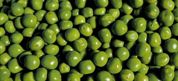 Pea grains. Photography of pea grains stock photography