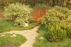 Beautiful ornamental shrubs and pea gravel path in autumn garden. Pea gravel path decorated with Cornus, Berberis, Rhododendron and Boxwood shrubs in autumn stock images