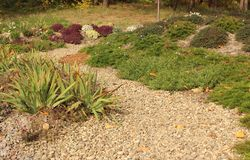 Pea gravel path and succulents flowerbed in autumn garden. Pea gravel path, Phlox Subulata and other groundcover plants in autumn garden royalty free stock images