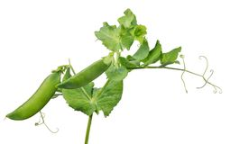 Pea green two pods with leaves on white Royalty Free Stock Photo
