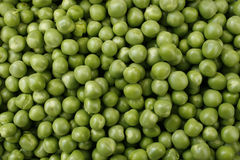 Pea 'Hurst Green Shaft'. Close up image of Pea 'Hurst Green Shaft Stock Photography