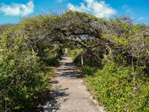 Pea Island National Wildlife Refuge imagens de stock