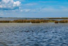 Pea Island National Wildlife Refuge fotografia de stock