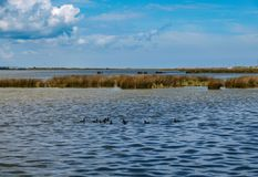 Pea Island National Wildlife Refuge fotografia stock