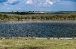 Pea Island National Wildlife Refuge royalty free stock photography