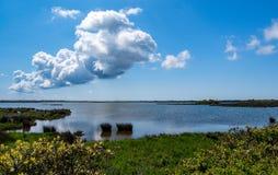Pea Island National Wildlife Refuge royalty-vrije stock afbeelding