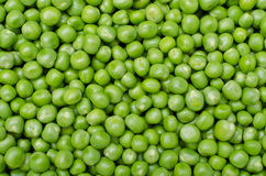 Pea. Large background of fresh green peas Stock Images
