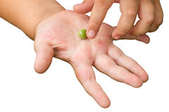 Pea in the palm of a child Royalty Free Stock Photography