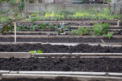 Pea Patch raised beds Royalty Free Stock Image