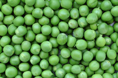 Pea, peas, green Stock Images