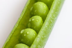 Pea pod. Close up of pea pod Royalty Free Stock Image