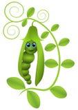 Pea Pod illustrazione di stock