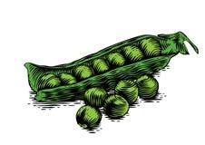 Pea pod with peas Royalty Free Stock Photo