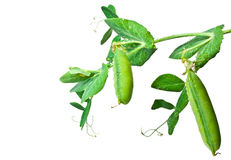 Pea pods Stock Photo