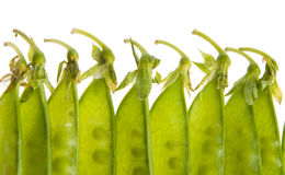 Pea Pods. Closeup of green pea pods isolated Royalty Free Stock Photos