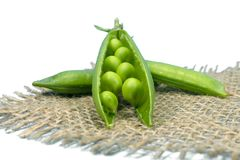 Pea pods and peas on square rustic hessian cloth. Fresh harvest green pea pods on hessian fabric in a close up view isolated on white background stock photo