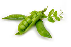 Pea pods on a white background. Green peas in pods on a white background to highlight Stock Image