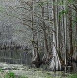 Pea River Swamp, Alabama Royalty Free Stock Images