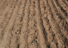 Pea seed and fertilizer Stock Images