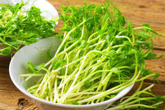 Pea sprouts Stock Image