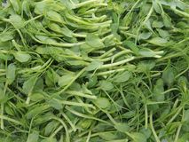 Pea sprouts salad. Heap of pea sprouts salad royalty free stock images