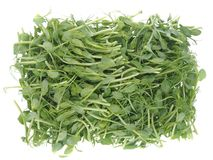 Pea sprouts salad. Isolated on white stock photography