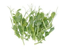 Pea sprouts salad. Isolated on white royalty free stock photos