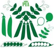 Pea. Vector illustration (EPS 10 Stock Photo