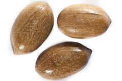 Peacan nuts Royalty Free Stock Photo