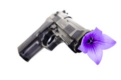 Peace. Gun and flower on a white background Stock Image