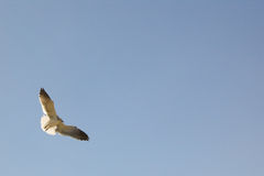 Bird flying high. Backlit by sunlight a bird flies high in the blue sky Stock Photo