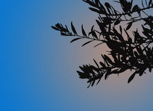 Peace. Olive leaves silhouetted against a sunset sky Royalty Free Stock Image