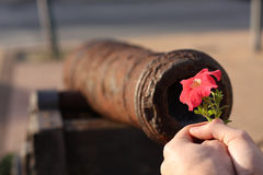 Peace. A person is offering a flower to a cannon Royalty Free Stock Photography