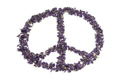 Peace for all. Shape of a peace sign, made out of very tiny lavender blossoms. Isolated on white background Stock Photography
