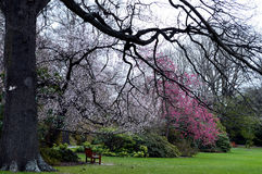 Peace and Beauty. Beautiful, tranquil scene of trees and flowers in the Botanical gardens in Christchurch New Zealand Royalty Free Stock Photo