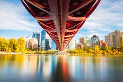 Peace Bridge Fall Season. Red Peace Bridge across Bow River in downtown. the view of color trees are very beautiful stock images