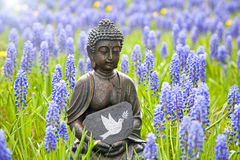Peace. Buddha statue with the dove of peace in a field of hyacinths Royalty Free Stock Images