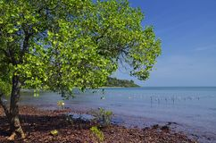 Peace on the coast side of Rabbit Island Royalty Free Stock Photos