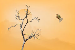 Peace (Concept picture image show emotion peace feeling) Bird fl Royalty Free Stock Photo