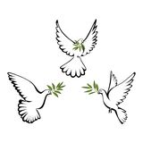 Peace dove. Three white dove with olive branch vector illustration