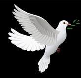 Peace dove royalty free stock photo