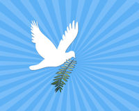 Peace Dove. Computer illustration:  White dove with branch on blue abstract background Royalty Free Stock Photos