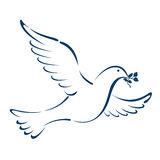 Peace dove Stock Photography