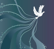 Peace Dove Stock Photos