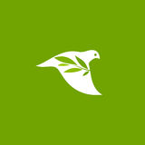 Peace dove with olive branch on a green background. Vector logo template Royalty Free Stock Images